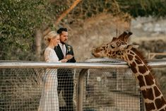 @blossomevents posted to Instagram: We love working at @thelivingdesert... if you are an animal lover, you will get the opportunity to be up and close with giraffes. 📷 - @ruthmariephotography #blossomeventsco #weddingplanner #palmspringswedding #palmspringsweddingplanner #destinationwedding #palmspringsbride #palmdesertwedding #weddingplanning #weddinginspiration #weddingideas #weddingday #bridetobe #greenweddingshoes #oncewed #thelivingdesert #zoowedding #thelivingdesertweddings