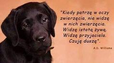 Labrador Retriever, Dog Cat, Puppies, Lettering, Dogs, Quotes, Animals, Labrador Retrievers, Quotations