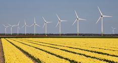 tulips and windmills in HOlland by Ilse Cardoen