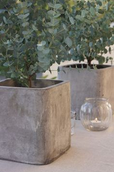 pretty square concrete planters - use square buckets as molds?