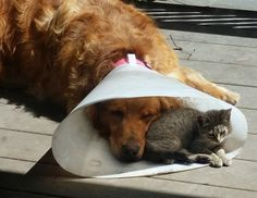 It's nice to have a friend when you're down and out,,,,