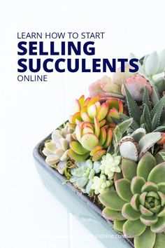 If you have a bunch of succulents at your house, selling them could be a great way to earn some extra money! Learn some important tips for selling succulents online in this post. Succulents Online, How To Water Succulents, Growing Succulents, Succulent Gardening, Planting Succulents, Gardening Tips, Indoor Succulents, Succulent Gifts, Indoor Gardening
