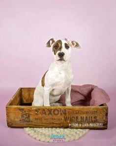Pet and Dog Photo Backdrop Studio Backdrops, Vinyl Backdrops, Studio Family Portraits, Pet Portraits, Photo Wall Hanging, Lilac Roses, Dog Photography, Diy Stuffed Animals, Photo Backgrounds