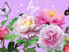 Download Wallpaper ID 1787532 - Desktop Nexus Nature