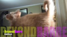 BeyondBarre Gliding with Scooch on Vimeo