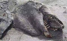 Strange marine creature washed up dead on New Zealand beach [video]