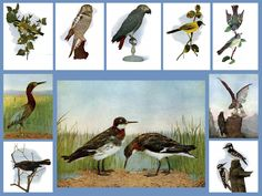 Check out this collection of 40 antique bird prints at OldEarthDigitalPrint on Etsy. Only 5.99 at https://www.etsy.com/your/shops/OldEarthDigitalPrint/tools/listings/page:5/216504557. Please share if you like. Thanks!
