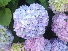 Flores en Croacia
