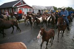PHOTOS: Annual Pony Swim Brings Wild Horses Across Islands, Puts Them Up For Sale