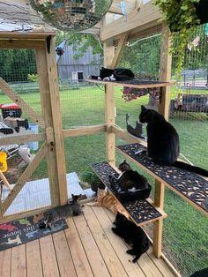 Diy Cat Enclosure, Outdoor Cat Enclosure, Cat Castle, Cat Playground, Cat Condo, Unique Cats, Cat Room, Outdoor Cats, Cattery