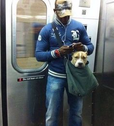 Great Photo Reshare. For The Size Of This Pitbull's Head We're Surprised He Fits In This Bag!   #dogpics #nycdogs The New York subway system bans canines unless they can fit in a small bag, so this guy trained his pit-bull to calmly sit in his small bag. Dogs are family — with Kalpna Mudgil and 3 others.