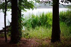 walk about Harris Lake 17