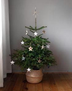 Tak tohle je ten náš... 💁🏼♀️🌲⭐️ _ Letos frčíme na hvězdičkách. ⭐️ V reále je ten stromek takový hezčí, ale fotila jsem ho ráno a nějak to… Teen, Plants, Instagram, Plant, Planets