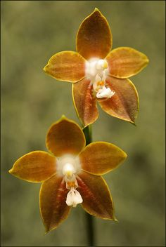 Exotic Orchids by Foto Martien in the Utrcht University Botanic Gardens in Utrecht, the Netherlands