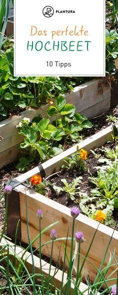 10 Tipps Fur Das Perfekte Hochbeet Hochbeet Garten Hochbeet Und Erhohte Gartenbeete