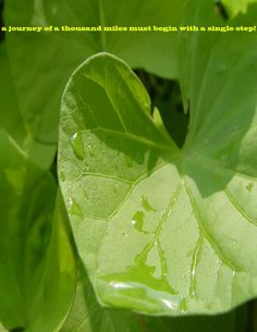 photography Plant Leaves, Plants, Photography, Photograph, Photography Business, Flora, Photoshoot, Fotografie, Fotografia