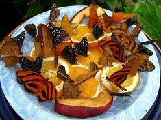 What to do with old, mushy fruits?? Feed the butterflies! A small plate holding the fruits, inside a larger plate with water, will help keep the ants at bay. GREAT IDEA!!!