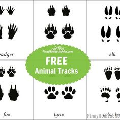 Animal Tracks Learning Material animals silly animals animal mashups animal printables majestic animals animals and pets funny hilarious animal Arctic Animals, Forest Animals, Woodland Animals, Majestic Animals, Kindergarten Worksheets, In Kindergarten, Animal Footprints, Printable Animals, Animal Tracks