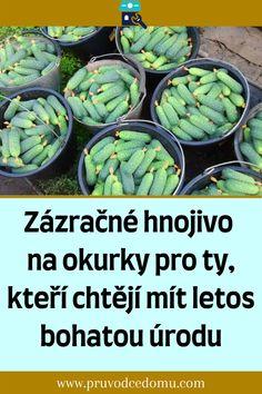 Artichoke, Vegetables, Food, Lawn And Garden, Artichokes, Essen, Vegetable Recipes, Meals, Yemek