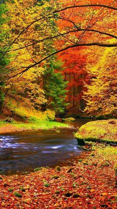 Autumn landscape, colorful leaves on trees, morning at river. Vinyl Wall Mural - Seasons Autumn landscape, colorful leaves on trees, morning at river. Wall Mural ✓ Easy Installation ✓ 365 Days to Return ✓ Browse other patterns from this collection! Landscape Photography, Nature Photography, Photography Tips, Scenic Photography, Night Photography, Amazing Photography, Beautiful Places, Beautiful Pictures, Beautiful Dream