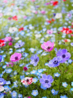 Field Flowers in Spring.