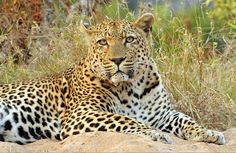 The Kruger National Park is the perfect destination to view the Big Five as well as the multitude of animals and birds Africa has to offer. Kruger National Park, Pet Birds, Safari, Photographs, Africa, Around The Worlds, Usa, Animals, Animales
