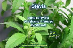 Come coltivare la Stevia ed ottenerne il prezioso dolcificante