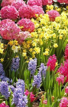 Spring has sprung !!!! Hydrangea,Daffodil & Hyacinths
