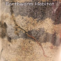 Earthworms are the Earths friend, they eat the soil (or compost material) and as it goes through them and out the other end they add extra n...