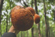 Прогулка по лесу! Грибной суп обеспечен!) #грибы #лес #природа #фотография #фото #лето