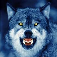 Canavar Sekilleri Ile Ilgili Gorsel Sonucu Snarling Wolf Wolf Dog Wolf
