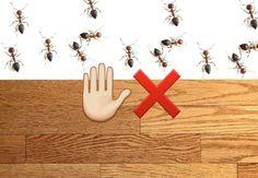 Sådan undgår du myrer i huset uden kemi | Magasinetliv.dk