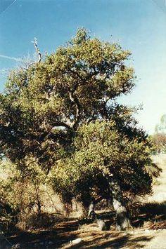 Eaton Canyon Natural Area and Nature Center located in Pasadena, California. Eaton Canyon, Alta California, Nature Center, Tree Forest, Golden State, Forests, Coast, Trees, Live