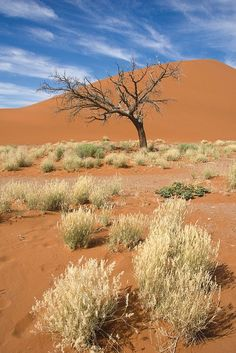 Frauke Scholz: Namib-Wüste #wandbild #homedecor #einrichtung #walldecor #wallpicture #poster #africa #africanprint #africanart Vinyl, Vineyard, Poster, Country Roads, Plants, Outdoor, Africa, Products, Print To Canvas