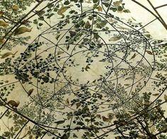 * Chambre aux oiseaux que le cardinal Ferdinand de Medicis a commandée au peintre florentin Jacopo Zucchi vers les années 1576-1577