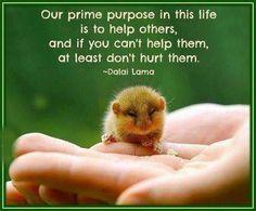Dalai Lama quote................so true!!