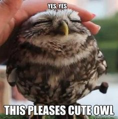 Yes yes this pleases cute owl