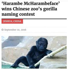 Harambaby was my choice