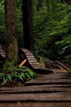 Forest mountain bike trail
