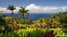 Garden of Eden Botanical Arboretumhttp://www.hawaii-guide.com/maui/sights/garden_of_eden_botanical_arboretum