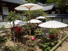 Peony garden of Oka-dera in Japan (Nara Prefecture in Japan)