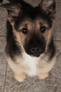 I feel like I need this puppy more than anything.!