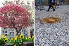 Prefeitura manda cortar cerejeiras doadas à Curitiba pelo imperador do Japão