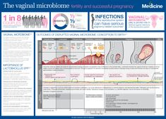 In this infographic we explore the fundamental importance of the vaginal microbiome and the significant influence this has on the reproductive process, from conception to birth. Reproductive System, Conception, Fertility, Ecology, Infographic, Pregnancy, Medicine, Success, Posters