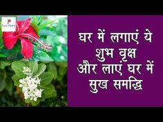 vastu plants in home घर के लिए 10 शुभ वृक्ष Rangoli Borders, Rangoli Border Designs, Camphor Uses, Garden Plants, House Plants, Balcony Herb Gardens, Tortoise House, Lucky Plant, Hindu Mantras