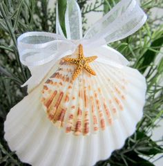 scallop shell craft ideas | Beach Decor Seashell Christmas Ornament by beachgrasscottage, $14.00