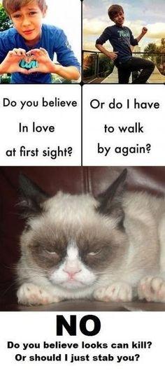 I love this cat. Her looks are priceless. Grumpy Cat Quotes, Funny Grumpy Cat Memes, Funny Cats, Funny Animals, Cute Animals, Funny Memes, Grumpy Cats, Hilarious, Jokes