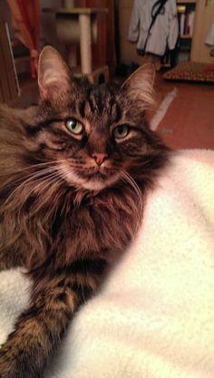 Spiki Katze | Pawshake Planegg