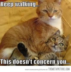 funny cats | funny-cats-fight-orange #CatFace