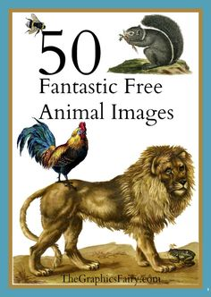 50 Free Vintage Animal Images! - The Graphics Fairy. So many great freebies to use in Crafts and DIY Home Decor projects! Perfect for Graphics Design , web design, digital Collage or making your own Printables!